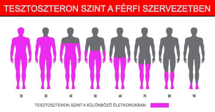 A prosztata tesztoszteron alacsony)